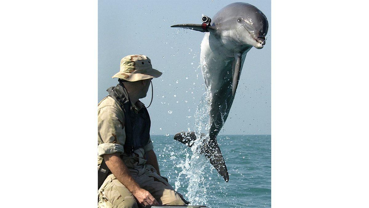 Military Marine Mammals